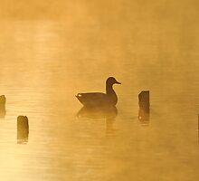 Quack by Kasia Nowak