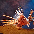 Lionfish by venny