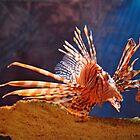 Lionfish by venny