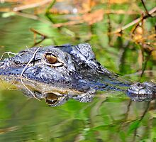 GATOR HEAD IN THE SWAMP by imagetj