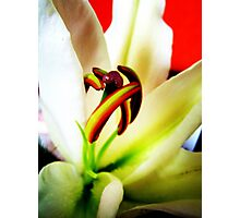 first lily for you Photographic Print