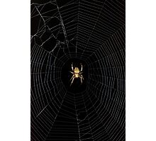 Spider Open for Business Photographic Print