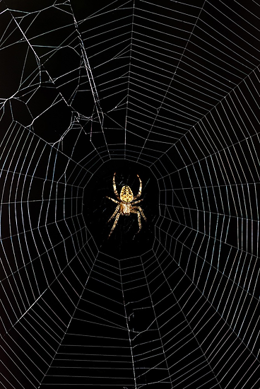 Spider Open for Business by Phil Campus