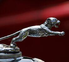 Jaguar SS by dlhedberg