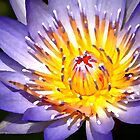 waterlily wonder by mmpaintings
