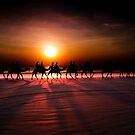 Camel Ride by Andrew Dickman