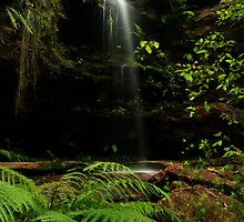 Rainforest by Martin  Hoffmann