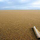 Big Beach by David Alexander Elder