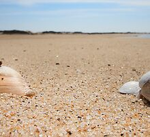 Hard Shelled Clam - Provincetown Beach by capecodart
