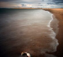 Seashell and Race Point Lighthouse by capecodart