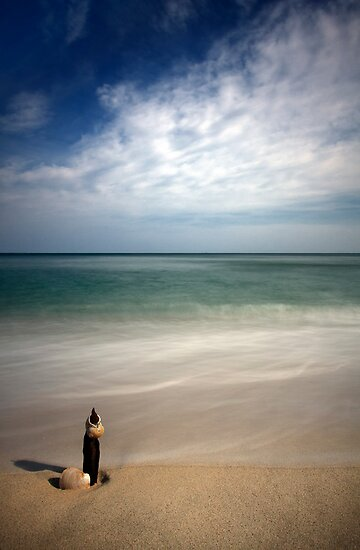 Longnook Beach Shell by capecodart