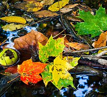 Wet Fall Forest Floor by Kenneth Keifer