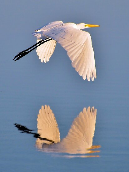The Mirrors Reflection by Kathy Baccari