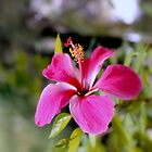 Bahamian Flower by Deborah Crew-Johnson