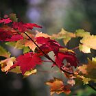 The Colors of Autumn  by Diane Blastorah