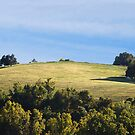 Hill Top Pasture by barnsis