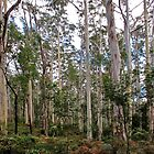 Blue Gum Forest by Andrew Bosman