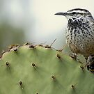 Cactus Wren by Angela Pritchard