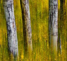 Autumn Aspens Recollections by John  De Bord Photography