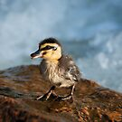 """""""This Little Duck"""" by Heather Thorning"""