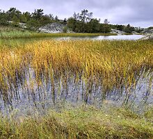 Reed in the archipelago. by cloud7
