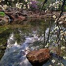 Spring At The Pond by Carolyn  Fletcher