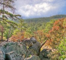Robber's Cave State Park by Carolyn  Fletcher