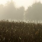 Small spider-webs in grassland at foggy day by Antanas