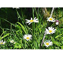 Swedish wild flowers Photographic Print