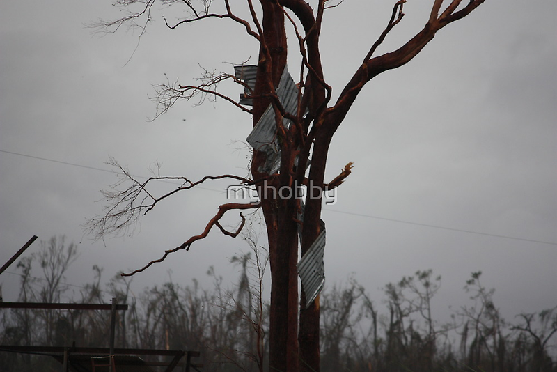 part of house roof up a tree Cyclone Yasi - Kennedy, North Queensland, Australia by myhobby