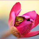 Dwarf Frog hiding in Lotus Flower by Susan Kelly