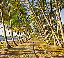 Pathway Through The Palms by TonyCrehan