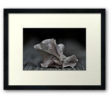 ....fallen fragility.... Framed Print