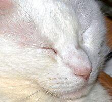 Shh...sleeping cat by ?? B. Randi Bailey