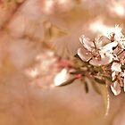 Vintage blossom by Katherina Bilko