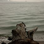 Stumped. by VictoriaCanning