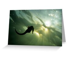 Seahorse (Hippocampus sp.), silhouette, underwater view Greeting Card