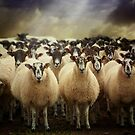 Sheepfest by ajgosling