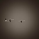 Flying flamingos by marcopuch