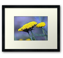Butter Weeds Framed Print