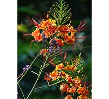 Weeds - autumn blossoms down by the riverside II Photographic Print