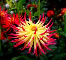 Spikey Flower by shelleybabe2