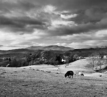 Sheep On A... by Leon Ritchie