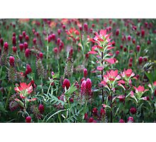 Paintbrush And Red Clover Photographic Print
