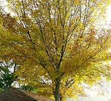 Yellow Tree by Amy Herrfurth