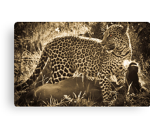 Leopard Lunch Canvas Print