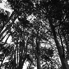Tree Canopy II, Bute Park, Cardiff by Artberry