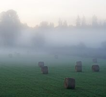 Fog In The Field. by Todd Rollins