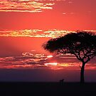 African Dawn by Jill Fisher