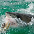 Great White Shark (Carcharodon carcharias) breaking waters surface, Gansbaii, Dyer Island, South Africa by Sami Sarkis